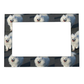 American Eskimo dog Magnetic Picture Frame