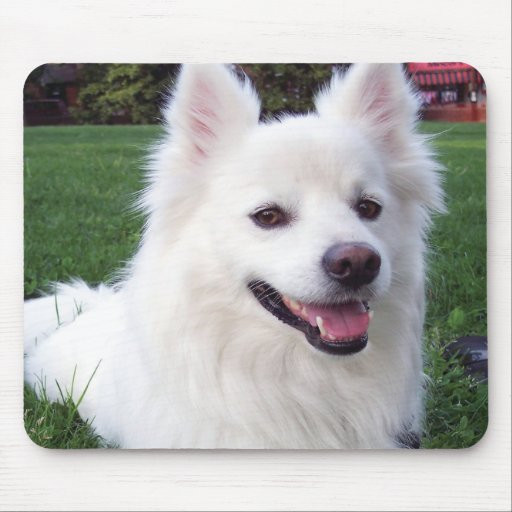 American Eskimo dog Mouse Pads