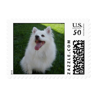 American Eskimo Dog Postage