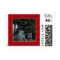 American Eskimo Dog Postage Stamp