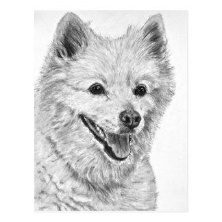 American Eskimo Dog Post Cards
