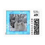 American Eskimo Dog Stamp