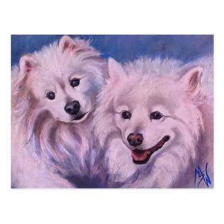 American Eskimo Dogs Postcard