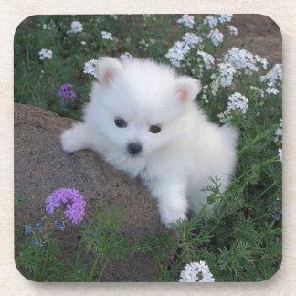 American Eskimo Puppy Dog Coaster