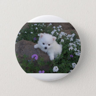 American Eskimo Puppy Dog Pinback Button