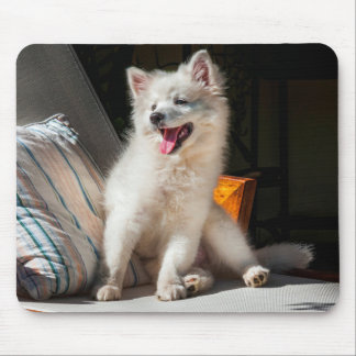 American Eskimo puppy sitting on a lawn chair Mouse Pad