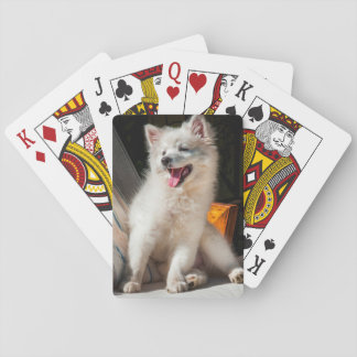 American Eskimo puppy sitting on a lawn chair Playing Cards