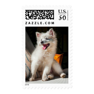 American Eskimo puppy sitting on a lawn chair Postage