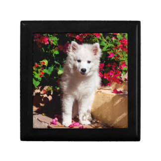 American Eskimo puppy sitting on garden stairs Jewelry Box