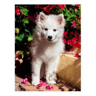 American Eskimo puppy sitting on garden stairs Postcard
