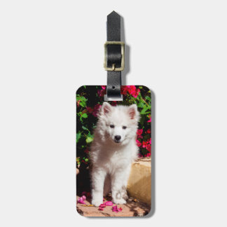 American Eskimo puppy sitting on garden stairs Tag For Luggage
