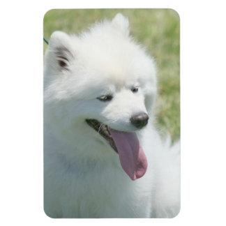 American Eskimo Rectangular Photo Magnet