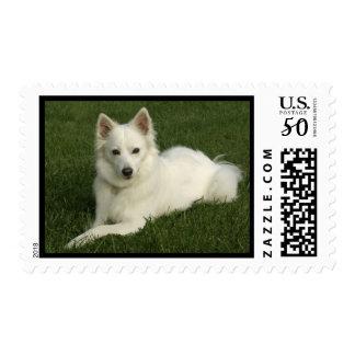 American Eskimo Stamp
