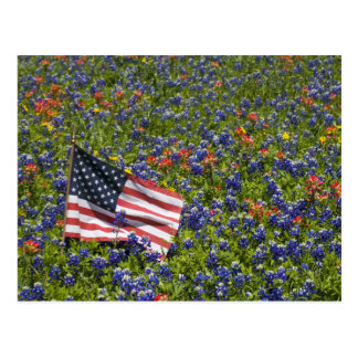 American Flag in field of Blue Bonnets, 2 Post Cards