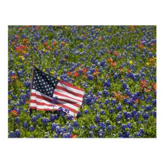 American Flag in field of Blue Bonnets, 2 Postcard