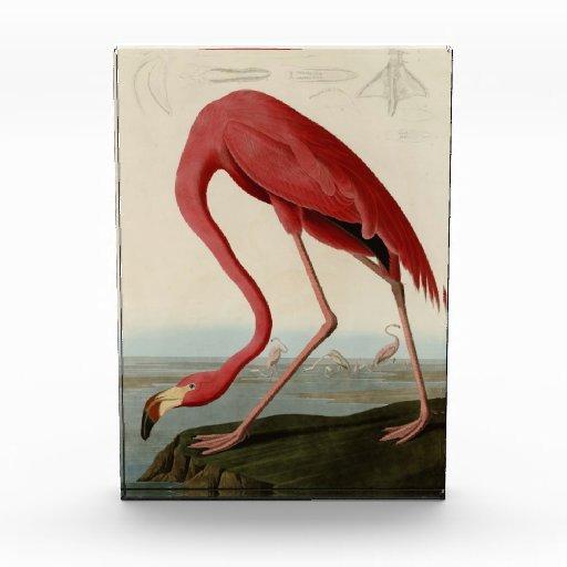 American Flamingo Acrylic Award