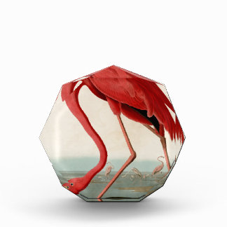 American Flamingo by Audubon Acrylic Award
