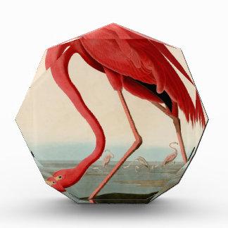 American Flamingo by Audubon Award