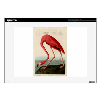 American Flamingo by Audubon Decal For Laptop