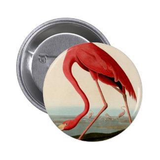 American Flamingo by Audubon Pinback Button