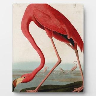 American Flamingo by Audubon Plaque