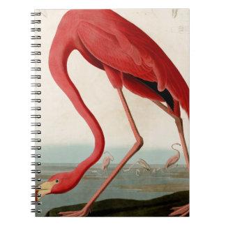 American Flamingo by Audubon Spiral Notebook