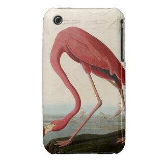 American Flamingo iPhone 3 Case