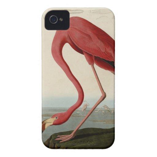 American Flamingo Case-Mate iPhone 4 Case