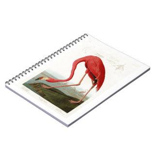 American Flamingo John Audubon Birds of America Notebook