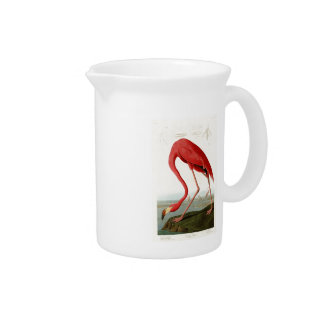 American Flamingo John Audubon Birds of America Pitchers