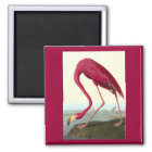 American Flamingo, John James Audubon Magnet