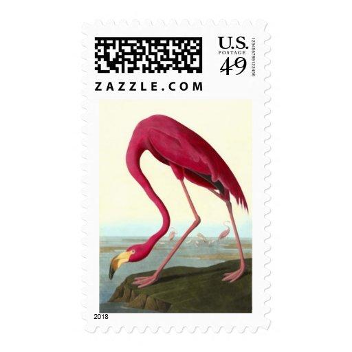 American Flamingo, John James Audubon Postage