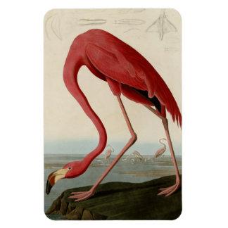 American Flamingo Magnet