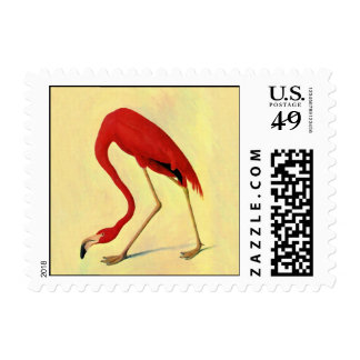 American Flamingo Painting Postage Stamps