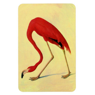 American Flamingo Painting Rectangle Magnets
