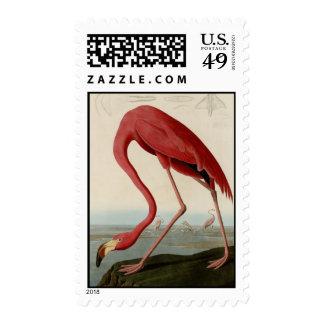 American Flamingo Postage Stamp