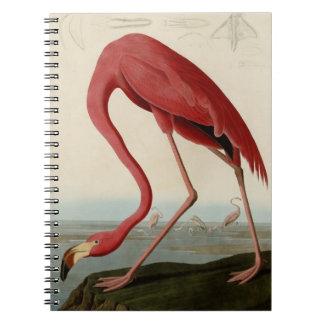 American Flamingo Spiral Notebook