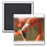 American Flamingo Square Magnet Refrigerator Magnet