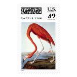 American Flamingo - Wildlife by John Audubon Postage Stamp