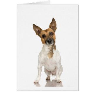 American Fox Terrier Card