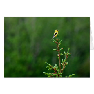American Goldfinch 1 Card