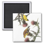 American Goldfinch 2 Inch Square Magnet