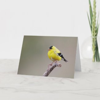 American Goldfinch Bird Card