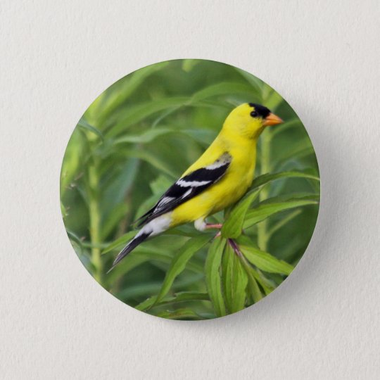 American Goldfinch Button