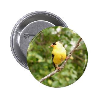 American Goldfinch 2 Inch Round Button