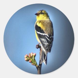 American Goldfinch Classic Round Sticker