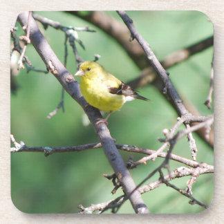 American Goldfinch Coaster