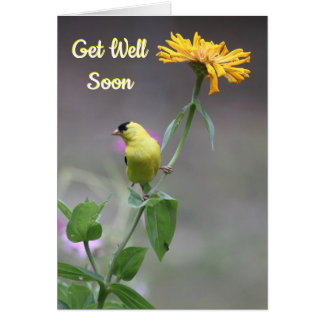 American Goldfinch Get Well Card