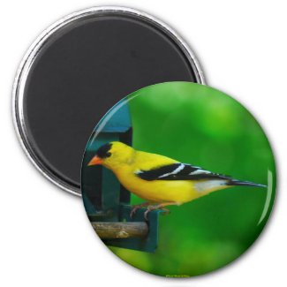 American Goldfinch Magnet magnet