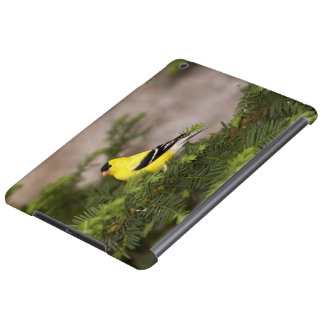 American Goldfinch male in a tree Case For iPad Air
